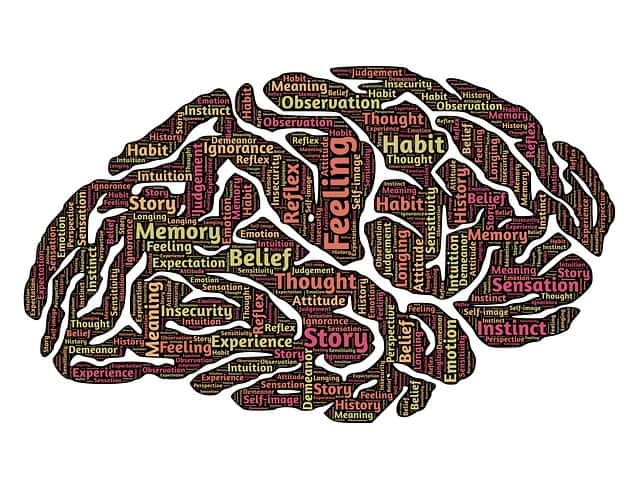 brain-544412_640